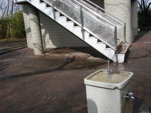 カラスの水飲み場